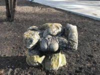 """Statuia """"Bucuria vieţii"""" poate fi văzută de trecători"""