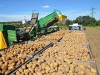 În judeţul Suceava, cea mai bună recoltă agricolă din ultimii 6 ani