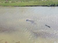 Bărbat găsit mort în râul Siret