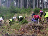 Peste 6300 de puieţi plantaţi într-o pădure privată din Parcul Naţional Călimani