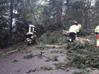 Furtunile au lăsat în beznă 600 de locuinţe, au doborât 10 arbori, au colmatat un podeţ şi au inundat o gospodărie