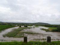 Peste 1.100 ha de terenuri agricole afectate de ploile abundente şi revărsările de ape