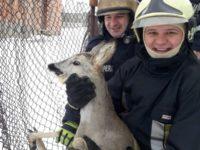 Misiune aparte pentru pompierii din Siret