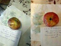 Peste 250 kg de mere stricate, confiscate de inspectorii DSVSA de la o şcoală din Suceava