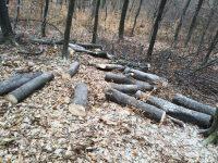 """Tăieri ilegale de arbori pe 7 ha, în fond forestier privat, cu servicii asigurate de Ocolul Silvic """"Bucovina"""""""