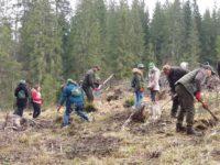 Bani europeni pentru prima împădurire
