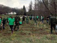 Romsilva va planta circa 20 de milioane de puieţi forestieri