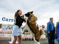 Bucovina Dog Show 2019, o nouă ediţie de succes