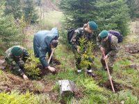 Acţiune de împădurire în teren accidentat şi greu accesibil