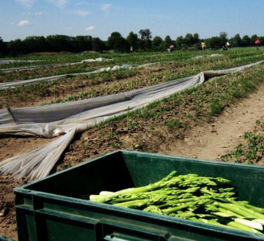 Sucevenii continuă să plece legal la muncă sezonieră în Germania
