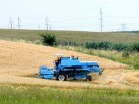 Recoltă şiştavă la grâu, pe fondul atacului bolilor şi uscării forţate