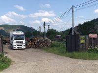 Confruntare între Greenpeace, Ministerul Apelor şi Pădurilor şi Romsilva, privind tăierile ilegale din pădurile Bucovinei
