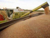 Recolte peste aşteptări la cereale
