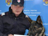 Olly, câinele pompierilor militari suceveni, s-a întors cu o medalie