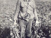 1968 – Papuc Ştefan, pe tarlaua CAP