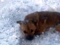 Mai mulţi câini împuşcaţi, găsiţi la ieşirea din Arbore