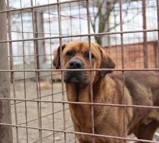 Noul adăpost pentru câinii fără stăpân, reabilitat în întregime