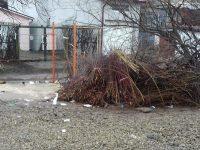 Începe campania de colectare a deşeurilor rezultate din toaletarea arborilor şi arbuştilor