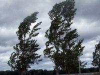 Cod galben de intensificări ale vântului şi viscol