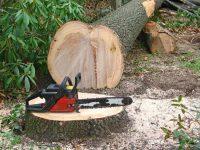Zeci de arbori tăiaţi ilegal de fiul unui moştenitor