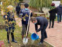 Conducerea Primăriei Suceava a început campania de plantare de arbori