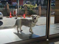 Un câine devotat