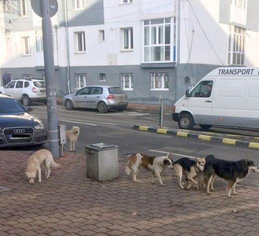 """""""Locul câinilor nu este pe stradă !"""""""