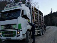 Poliţiştii suceveni au confiscat peste 1200 mc material lemnos