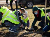 Fabrica de ambalaje UrsPack lansează campania #1copacpean şi plantează 50.000 de puieţi