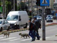 Câinii nedoriţi din Suceava şi din localităţile învecinate pot fi duşi direct la adăpostul special amenajat