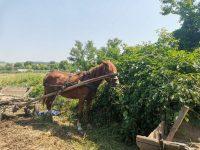 """Trei cai abandonaţi de hoţi de fier vechi în Iţcani au fost preluaţi de asociaţia """"Casa lui Patrocle"""""""