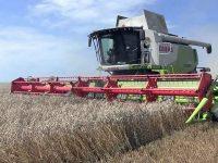 Recolte superioare la culturile de cereale