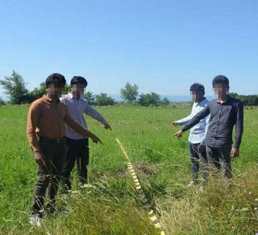 Patru tineri din Pakistan au intrat ilegal în România