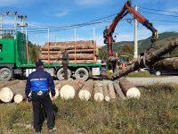 O firmă din Râşca a efectuat 11 transporturi de lemne fără avize, cu o cantitate totală de peste 460 mc !